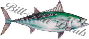 False Albacore